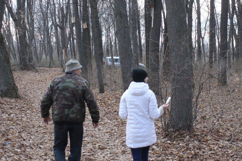 отметка сухих деревьев для спиливания в парке села Троекурово